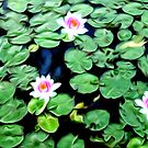 Maria's Water Lilies by Rookwood Studio ©