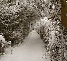 Snowy Path by Vicki Spindler (VHS Photography)
