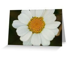 White Petals Greeting Card