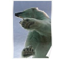 Polar Bear at Detroit Zoo Poster