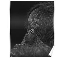 Melati the Orangutan Poster
