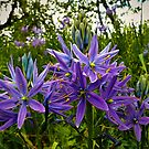 Wild Camas In Open Light by Charles & Patricia   Harkins ~ Picture Oregon