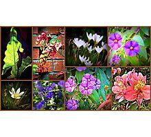 In my garden........ Photographic Print
