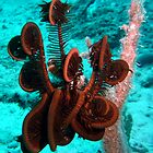 FEATHER STAR FISH by springs