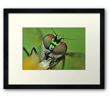 candy eyes Framed Print