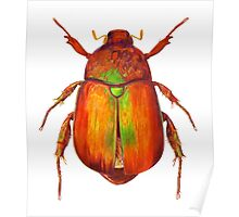 Iridescent Dune Chafer Beetle Poster
