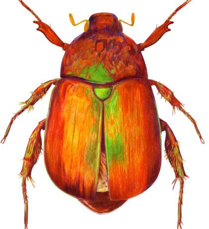 Iridescent Dune Chafer Beetle Sticker