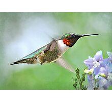 Hummingbird & Lavender Lapspar Photographic Print