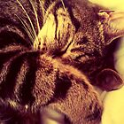 Sleeping Cat. by AmyAmata