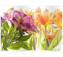 Going By... Alstroemeria and Tulips Poster