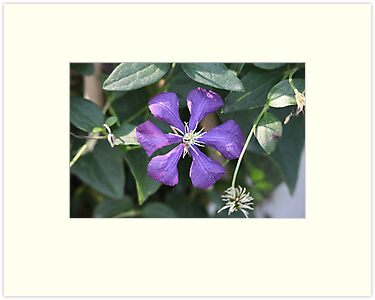 Purple Flower by Thomas Murphy
