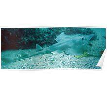 SHOVEL NOSE SHARK Poster