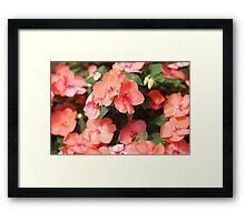 Peach Colored Flowers Framed Print