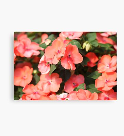 Peach Colored Flowers Canvas Print