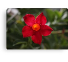 Red Flower Canvas Print