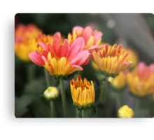 Yellow and Pink Flower Scene 7091 Metal Print