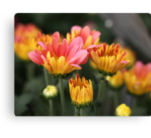 Yellow and Pink Flower Scene 7091 Canvas Print
