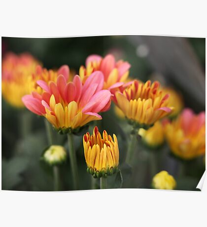 Yellow and Pink Flower Scene 7091 Poster