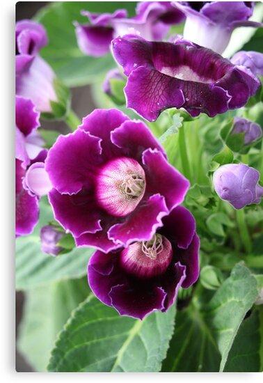 Purple Flowers by Thomas Murphy