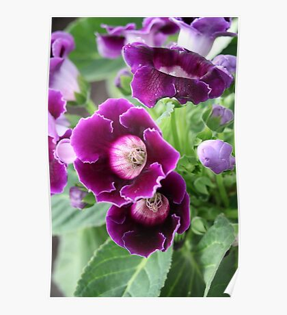Purple Flowers Poster