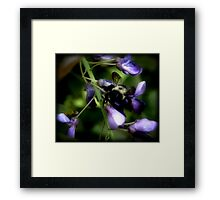 Night Glow of a Bee Framed Print