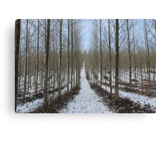 The Snow Trail Canvas Print