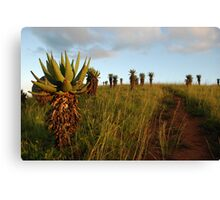marching up the hill Canvas Print