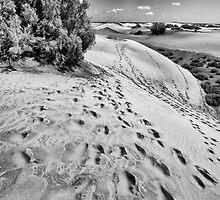 Dune Walk 2 by Rupert Sargeant