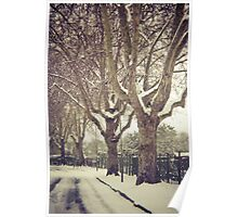 Tree Lined Poster