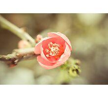 Winter Bloom  Photographic Print