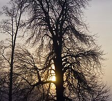 Sunset Behind Tree by Paul Collin