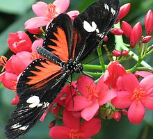 Butterfly 2 by Erinn822