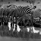 Water hole by Tony Hadfield