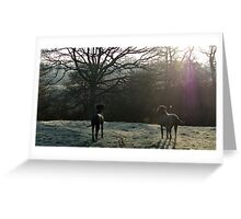 Black and Blue Great Dane looking away Greeting Card