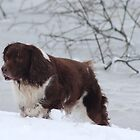 Dog in the snow by Tim Mizon