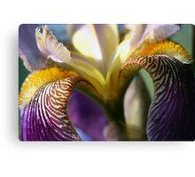 Iris macro abstract Canvas Print