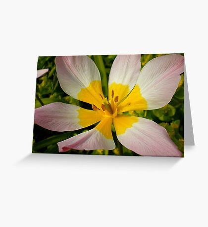 Double Coloured Greeting Card