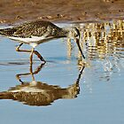 Lesser Yellowlegs by Linda Sparks