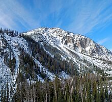 Yellowstone National Park by North22Gallery