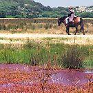 Aussie Horseman by Roz McQuillan