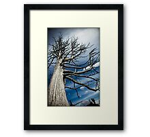 Many Limbs Framed Print
