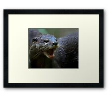 Oriental small Clawed Otter Framed Print