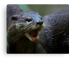 Oriental small Clawed Otter Canvas Print