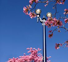 Spring in the city by Celeste Mookherjee