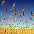 Fields of Gold by Robin Black