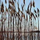 Sound Grasses by Robin Black