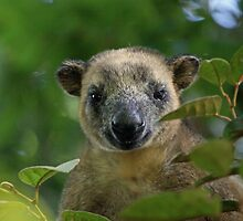 Lumholtz Tree Kangaroo (Dendrolagus Lumholtzi) by triciaoshea