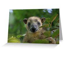 Lumholtz Tree Kangaroo (Dendrolagus Lumholtzi) Greeting Card
