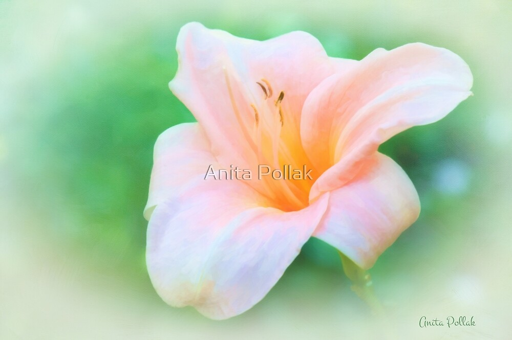 Glory of Summer by Anita Pollak