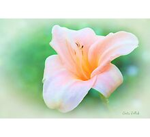 Glory of Summer Photographic Print
